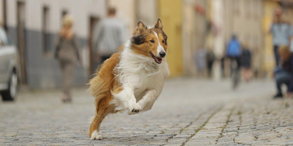 Lassie hazatér (2020) – Kritika