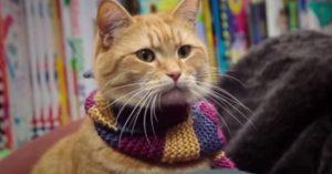 Elhunyt Bob, a világhírű csodás cica, film is készült Róla