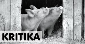 Állatok drámai élete | Kritika: Gunda (2020)