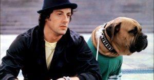 Tudtad? A Rocky sikere nemcsak Sylvester Stallone érdeme, hanem négylábú társáé is