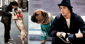 Sylvester Stallone kezdetben hajléktalan volt - kutyáját is eladta, nem fogod elhinni mit tett ezután